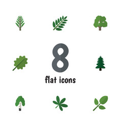Flat icon nature set of foliage alder timber and vector
