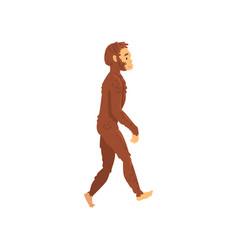 homo erectus biology human evolution stage vector image