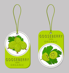 The gooseberry vector