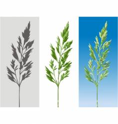 herb vector image
