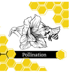 Bee pollinating flower sketch style vector