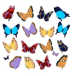 Big collection of colorful butterflies vector image