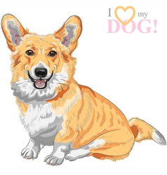 dog Pembroke Welsh corgi smiling vector image
