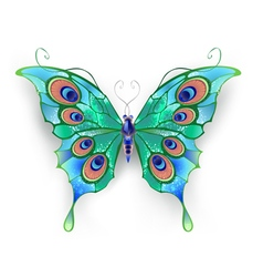 Green Butterfly vector image