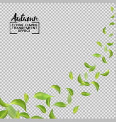 Green leaves flying with the wind objects vector