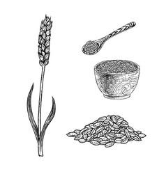 Hand drawn set of spelt plant porridge in bowl vector