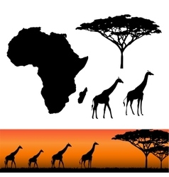 Africa and Safari elements vector image vector image