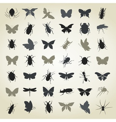 Collection of insects4 vector image vector image