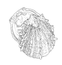 Hand drawn oyster with outline and fill sea food vector