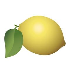 Lemon fruit isolated on white background vector image vector image