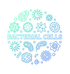 Bacterial cells round colorful outline vector