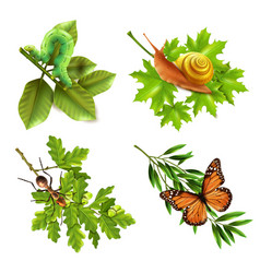 Insects realistic icons vector