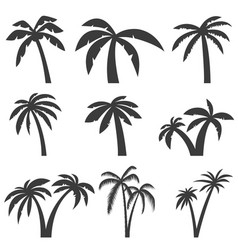 set palm tree icons isolated on white vector image