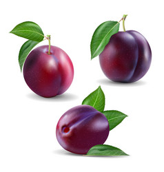quality realistic plum collection plums vector image vector image