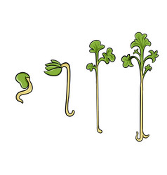 Evolution micro sprouts from sprout to adult vector