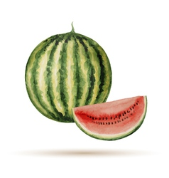 Watermelon hand drawn watercolor vector image