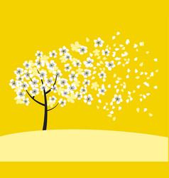 white sakura tree blossom on sunny yellow vector image