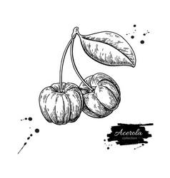acerola fruit drawing barbados cherry vector image