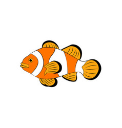 Amphiprion ocellaris clownfish vector