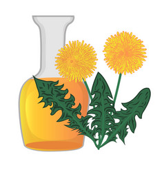 dandelion essential oil vector image