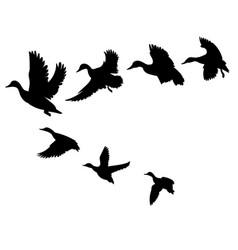 flock ducks a cartoon flock birds vector image