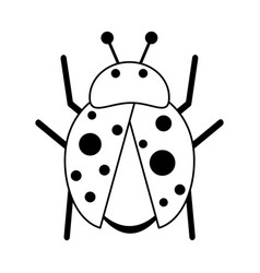 ladybug insect icon image vector image