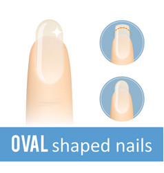 Nail shape oval vector
