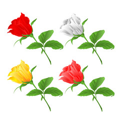Rosebud set red wite yellow and pink roses twig vector
