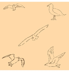 Seagulls sketch Pencil drawing by hand Figure in vector image