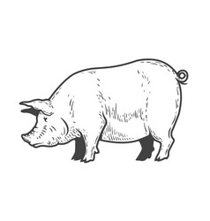 pig isolated on white background design elements vector image
