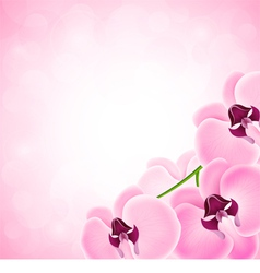 Background with orchid vector