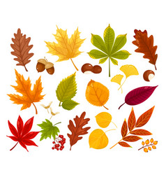 colorful autumn fall leaves and berries vector image