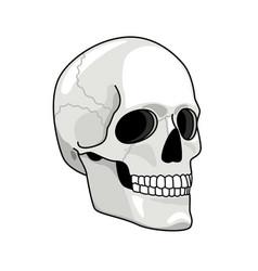 simple skull smiling skulls vector image