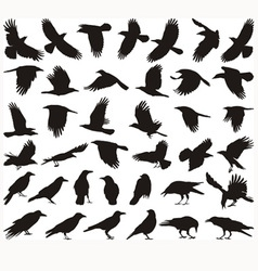 Bird carrion crow vector image