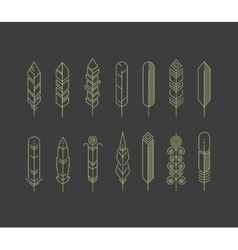 Linear feathers icons vector image vector image