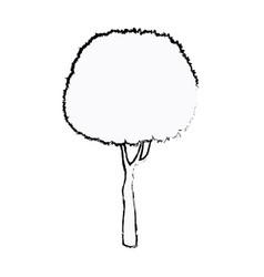 tree foliage stem trunk sketch vector image