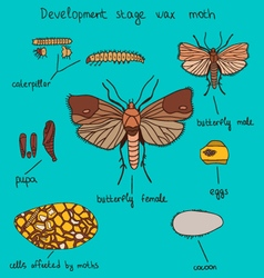 Development stage wax moth color vector
