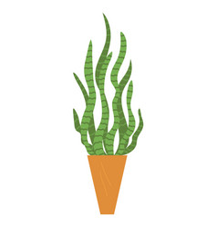 houseplant floral element leaves in vase isolated vector image