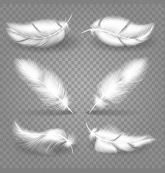 realistic white feathers vector image