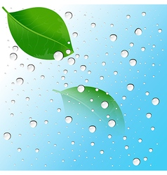 water drops on the leaves and blue background2 01 vector image