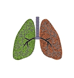 Lungs The structure of the human lung vector image