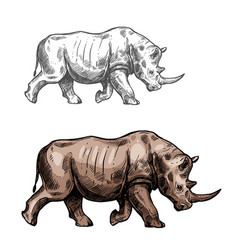 rhinoceros sketch wild animal isolated icon vector image