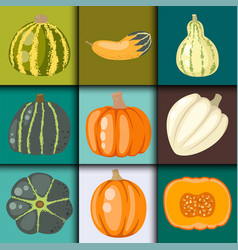 Fresh orange pumpkin decorative seasonal ripe food vector