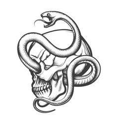 Human skull entwined by snake engraving vector