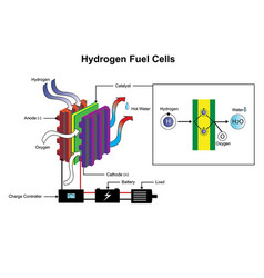 hydrogen fuel cells diagram vector image vector image