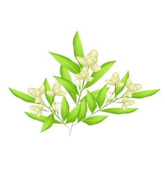 Beautiful ylang ylang flowers vector