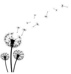 Black silhouette with flying dandelion buds vector
