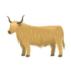 bull farm animal male standing vector image