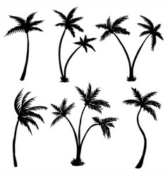 coconut palm tree silhouette vector image