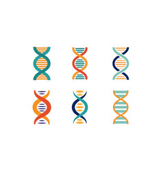 Dna strands set spiral genetic material vector